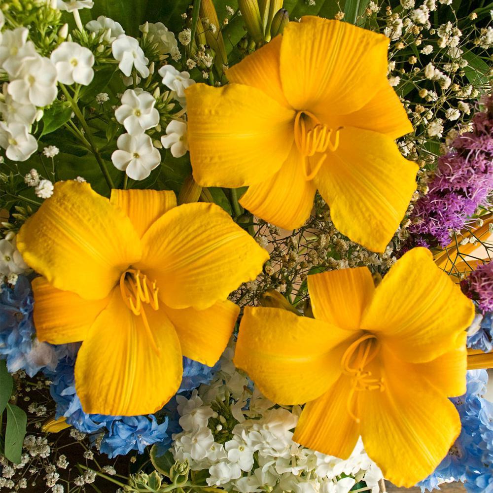 Buttered Popcorn Daylily (Hemerocallis) Live Bareroot Perennial with Yellow Flowers (1-Pack)