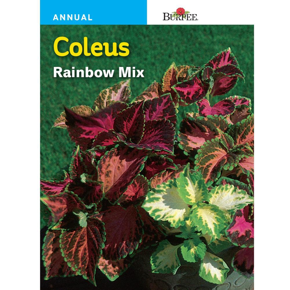 Burpee Coleus Rainbow Mix Seed 47324 The Home Depot