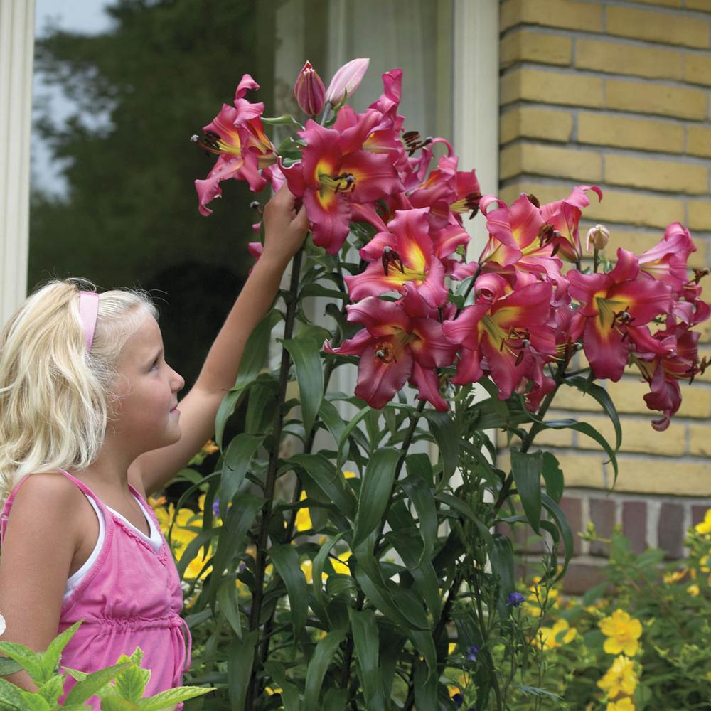 Altari Orienpet Giant Lily Bulbs (5-Pack)