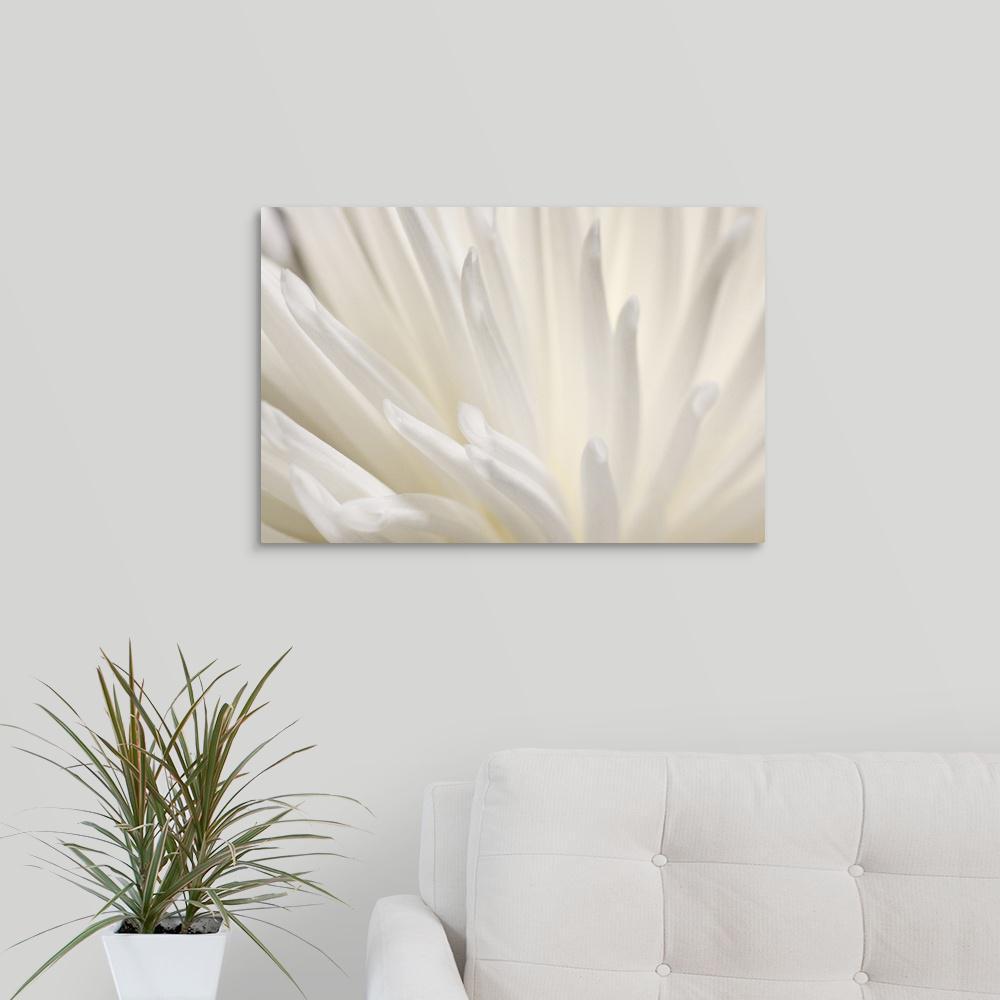 GreatBigCanvas ''White Flower'' by PhotoINC Studio Canvas Wall Art 2529387_24_24x16