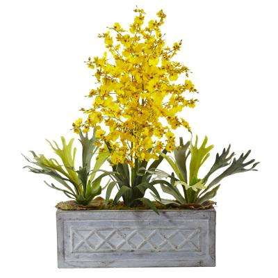 Indoor Dancing Lady and Staghorn in Stone Planter