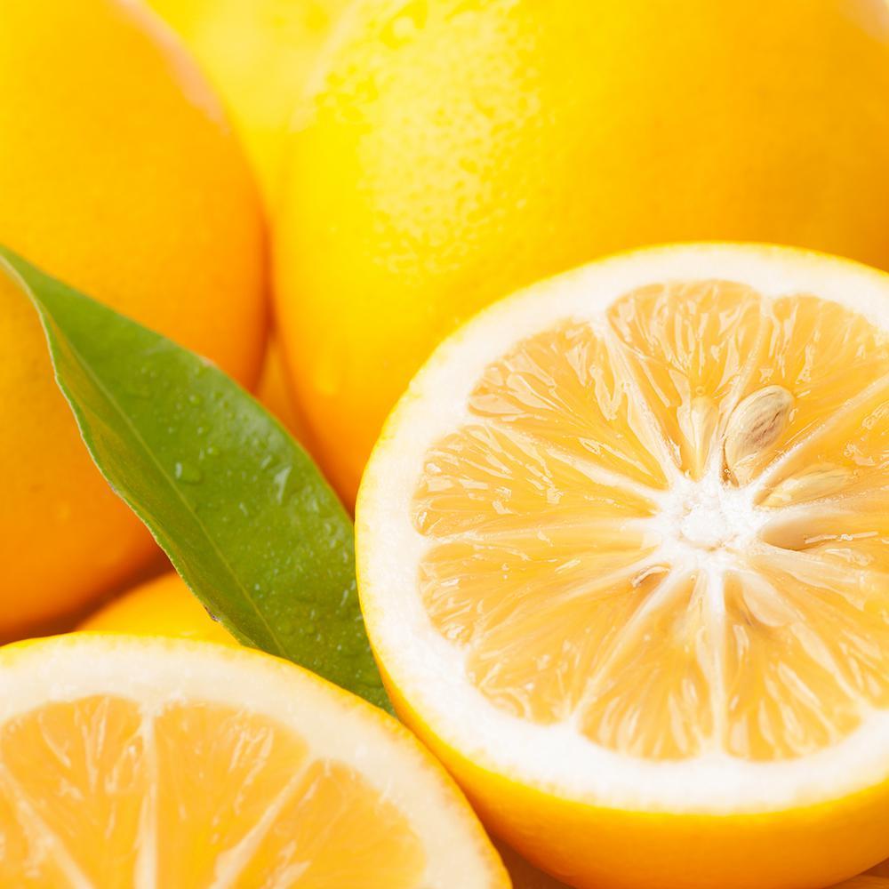 Lemon Citrus Tree -  Improved Meyer - 1 Plant