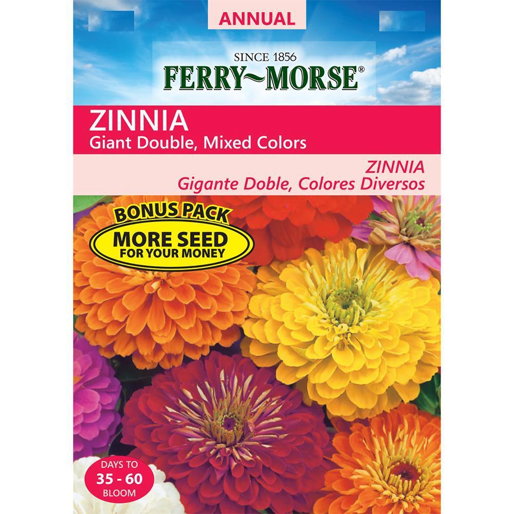 Zinnia, Giant Double Mixed Seed