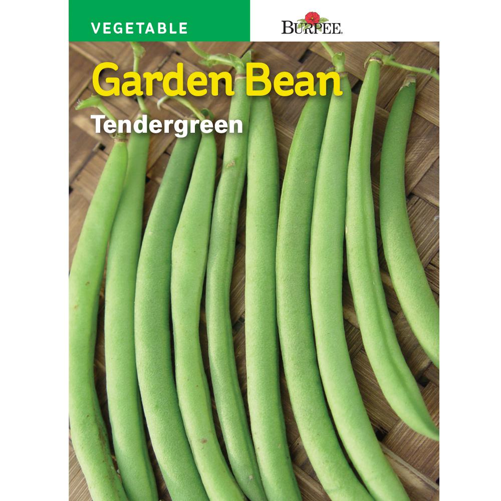 Bean Barden Tender-Green Seed