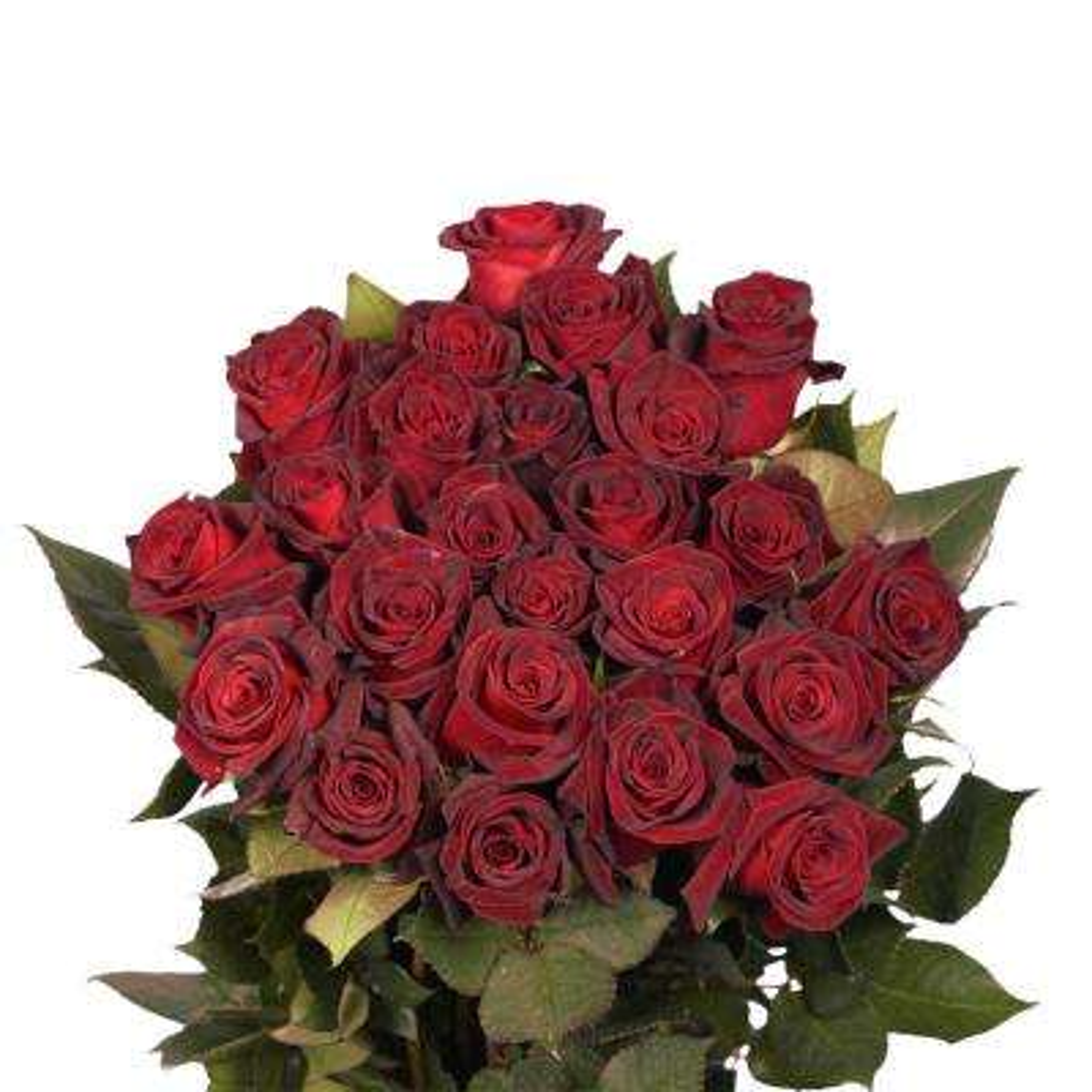 Fresh Black Baccara Dark Red Color Roses (100 Stems)