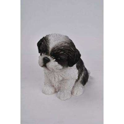 Black/White Shih Tzu Puppy