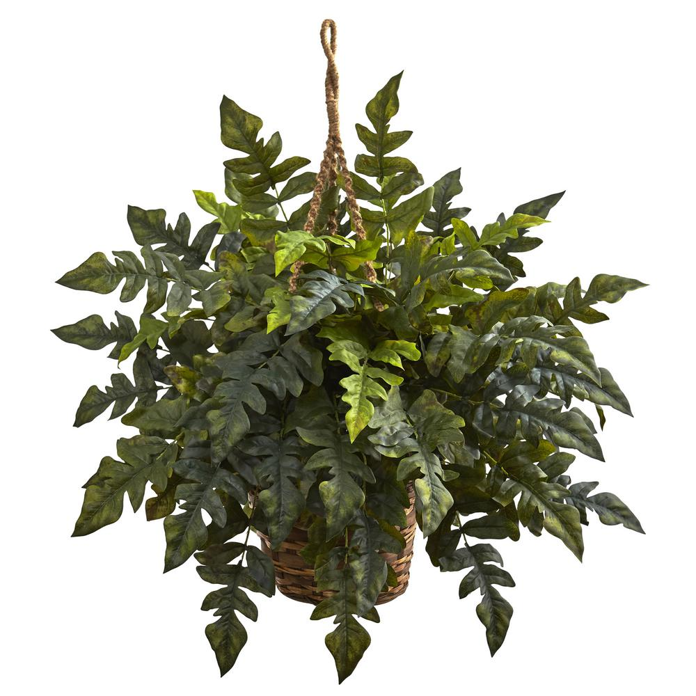 24 in. Holly Fern Hanging Basket