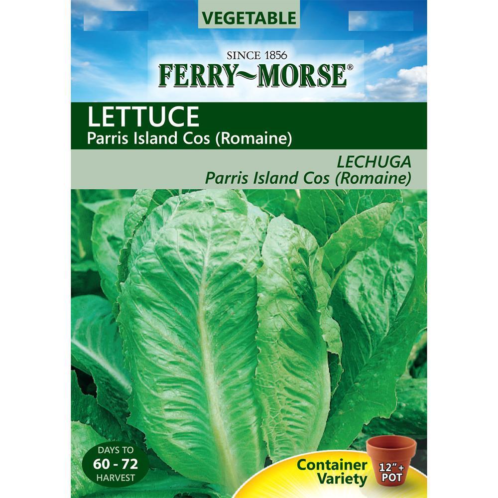 Lettuce Romaine Parris Island Cos Seed