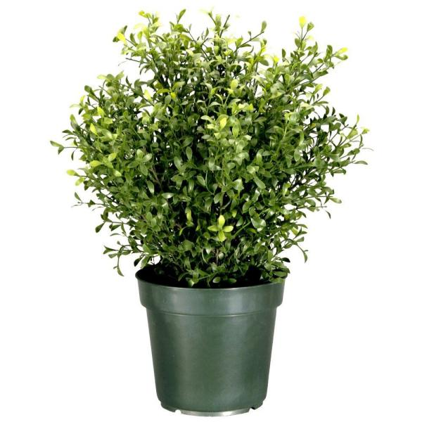 24 in. Argentea Artificial Plant in Round Green Growers Pot