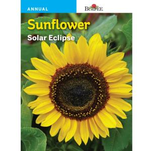 Burpee Sunflower Solar Eclipse Seed 32033 The Home Depot