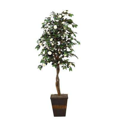 7 ft. Indoor Cream Camillia Tree in Square Wood Planter
