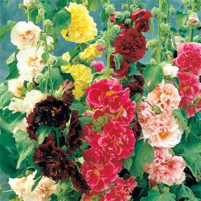 Double Hollyhock Mix Plant (5-Pack)