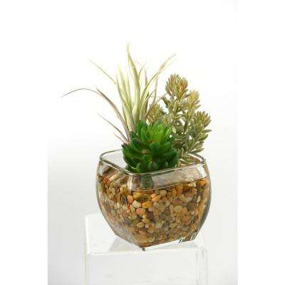 Indoor Succulent and Flocked Burro Tail in Glass Cube