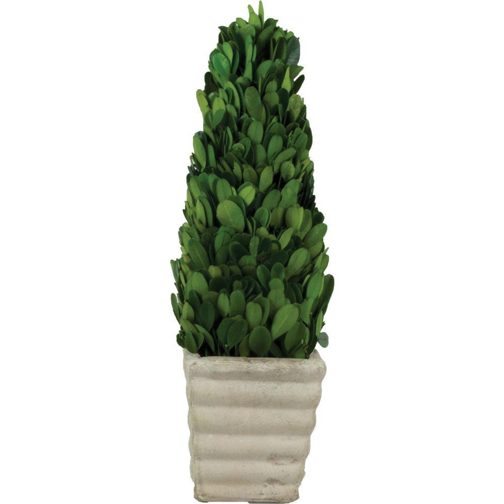 3.5 in. W x 12 in. H Preserved Boxwood Cone in White Terracotta Pot