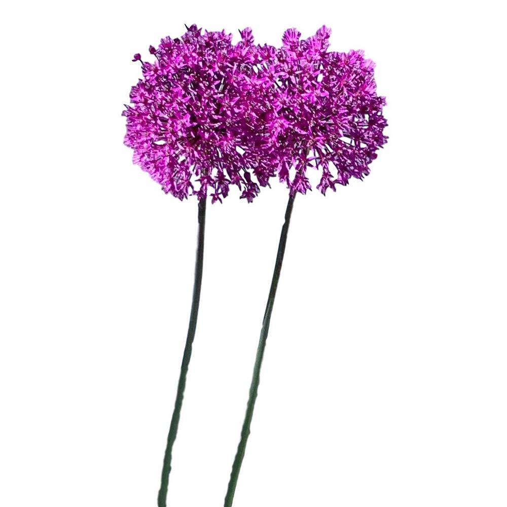 Allium Gladiator 8-Bulbs