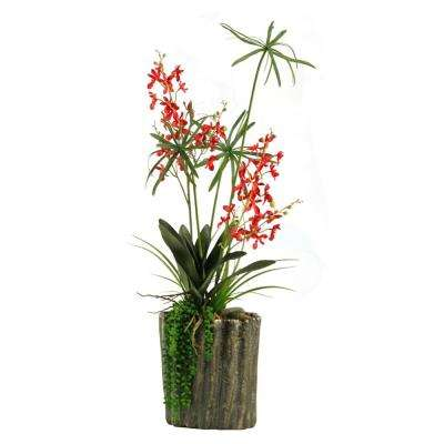 Indoor Red Baby Dendrobium Orchids in Oval Ceramic Planter