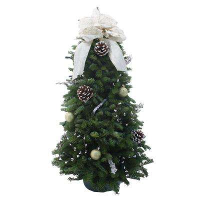 28 in. Balsam Fir Winter Elegance Fresh Tabletop Tree Arrangement : Multiple Ship Weeks Available