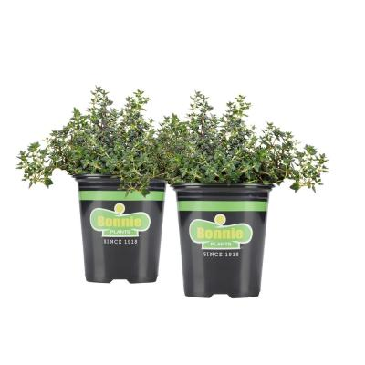 19.3 oz. German Thyme (2-Pack Live Plants)