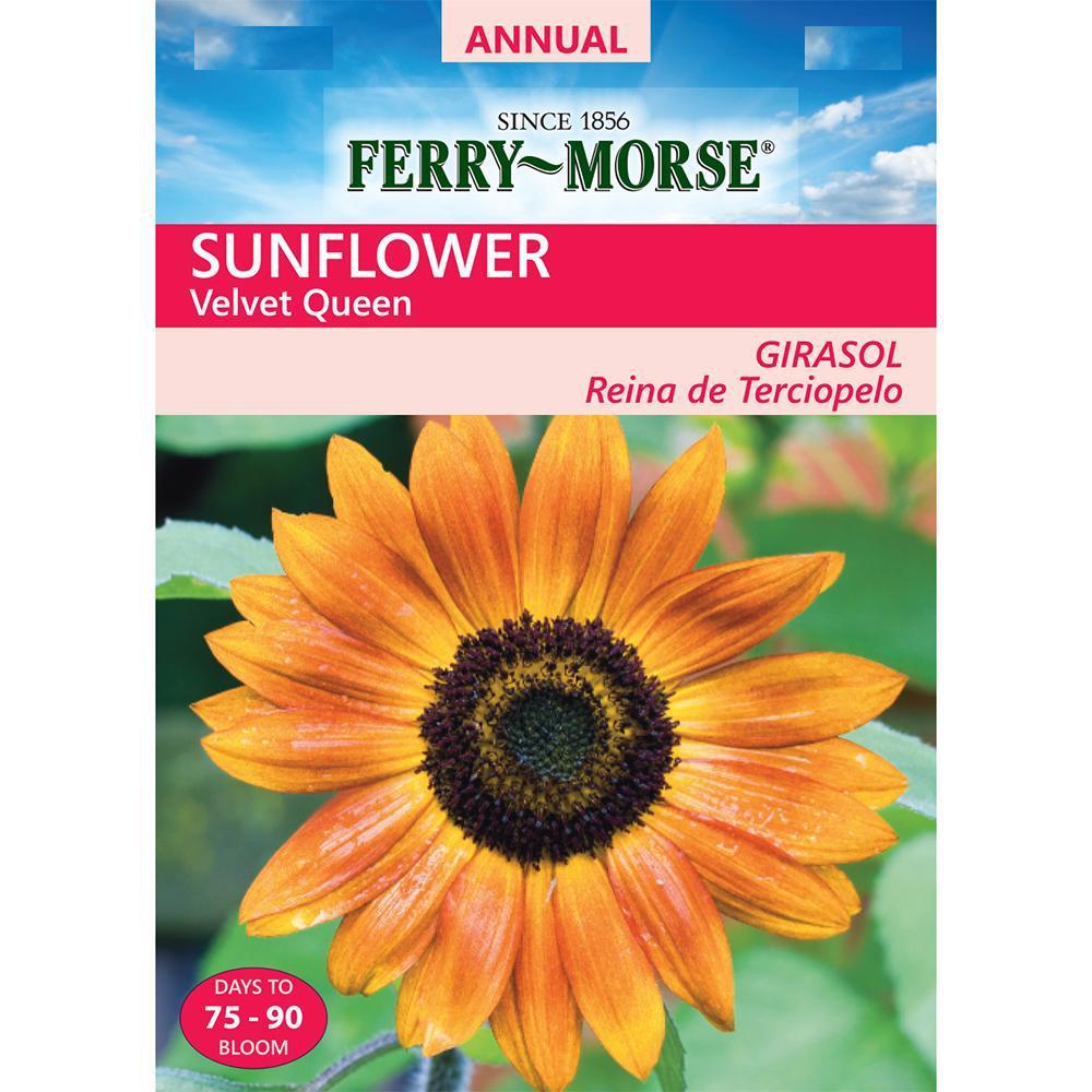 Flower Sunflower Velvet Queen Flower Seeds