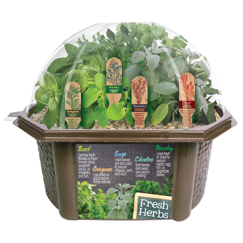 Biosphere Terrariums Brown Culinary Herb Collection Indoor Garden Terrarium Indoor Garden Seed Starter Kit