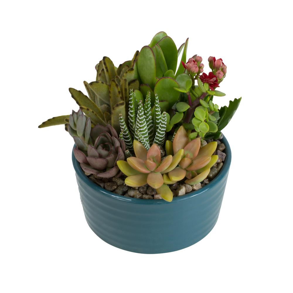Altman Plants 5 5 In Atlantic Blue Ribbed Glazed Succulent Garden