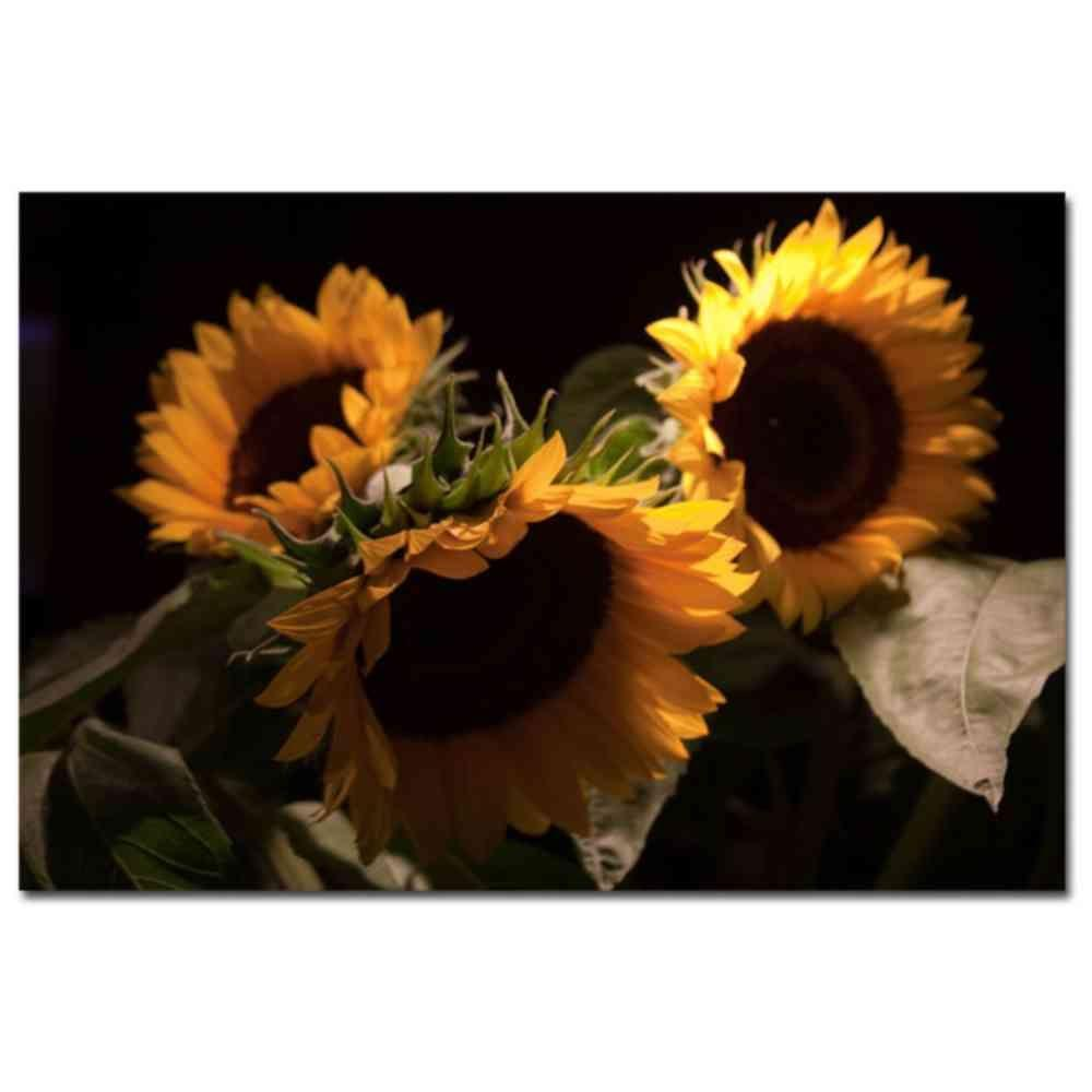 Sunflower III Canvas Art