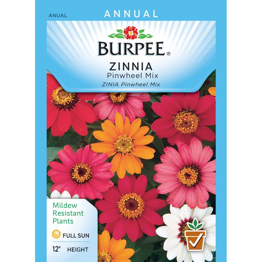 Burpee Zinnia Pinwheel Mix Seed