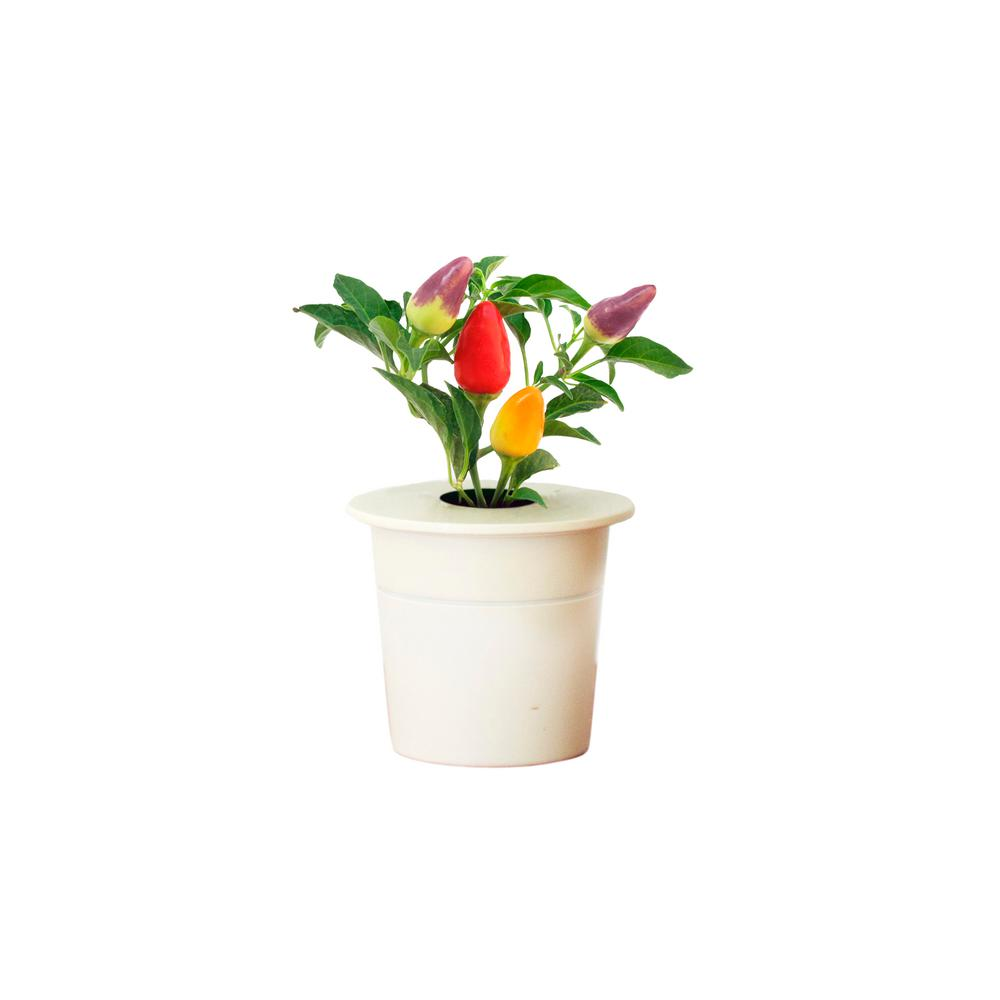 Click and Grow Chili Pepper Refill for Smart Herb Garden (3-Pack)
