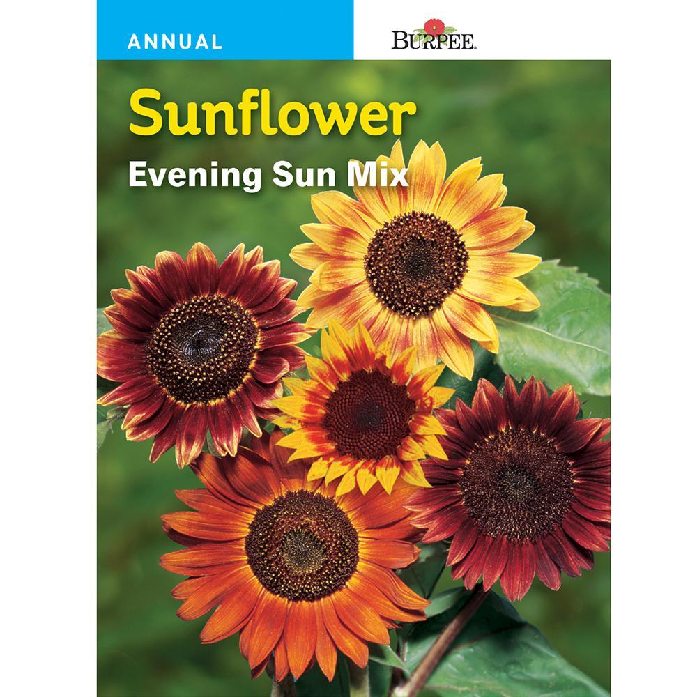 Sunflower Evening Sun Mix Seed