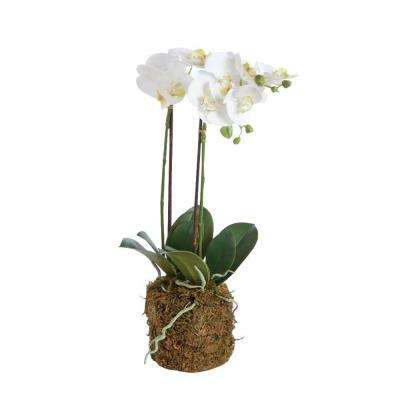 23 in. Poly and Plastic Drop-In Phalaenopsis