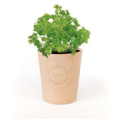 Organic Parsley Seeds in Natural Clay Planter