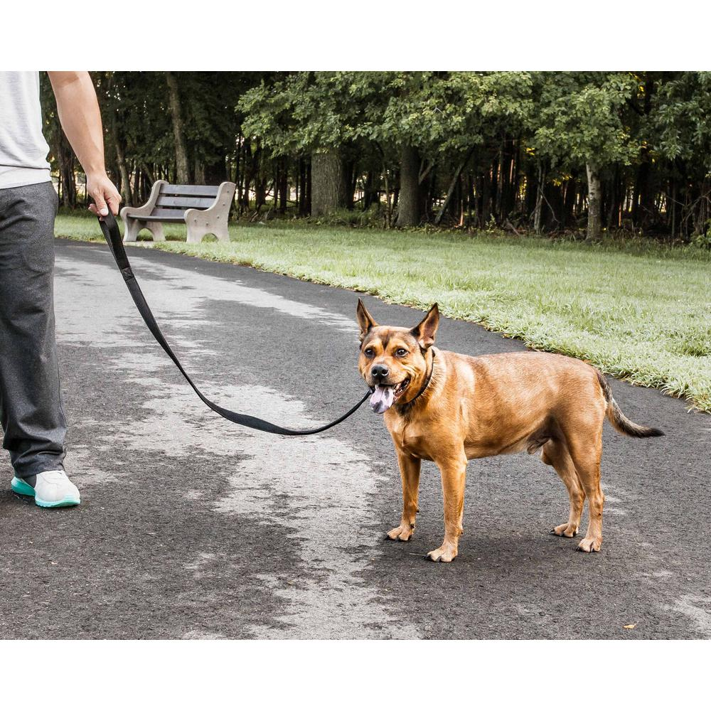 Dog-Wild Sporty Mesh Pet Dog Leash Walking Harness