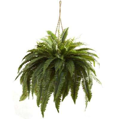 Double Giant Boston Fern Hanging Basket