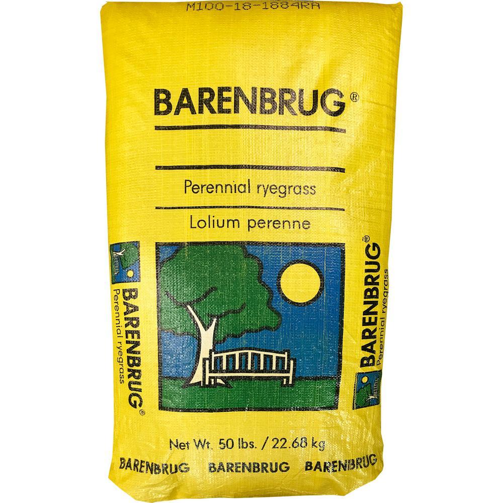 Barenbrug 50 lb  Parkside Perennial Ryegrass Seed