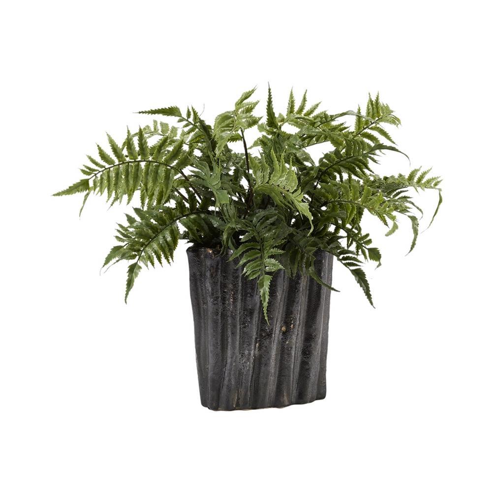 Indoor Medium Leather Leaf Fern in Oval Ceramic