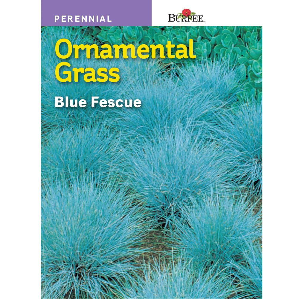 Burpee Blue Fescue Ornamental Grass Seed 46995 The Home Depot