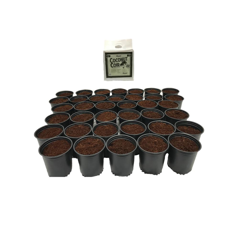 2 Qt. Plastic Nursery Trade Pots with Coconut Coir Growing Media