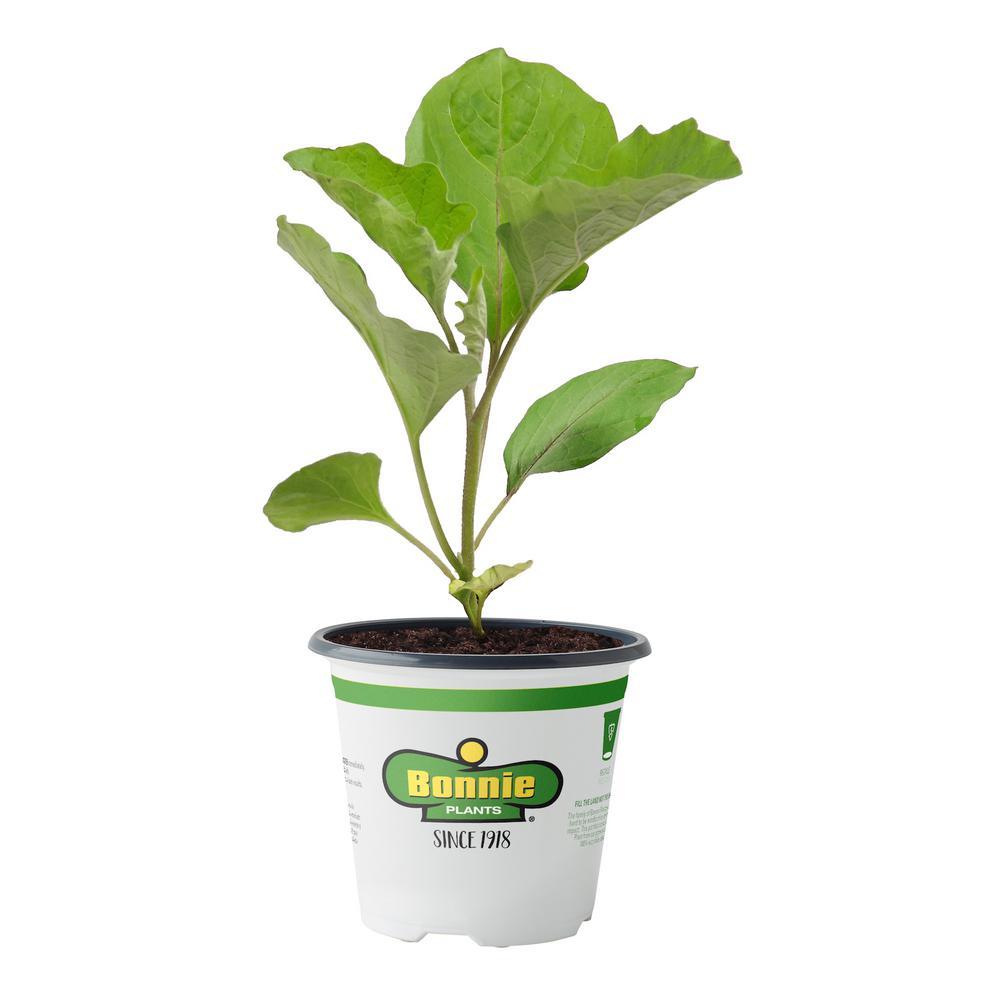 4.5 in. 19.3 oz. Eggplant-Ichiban