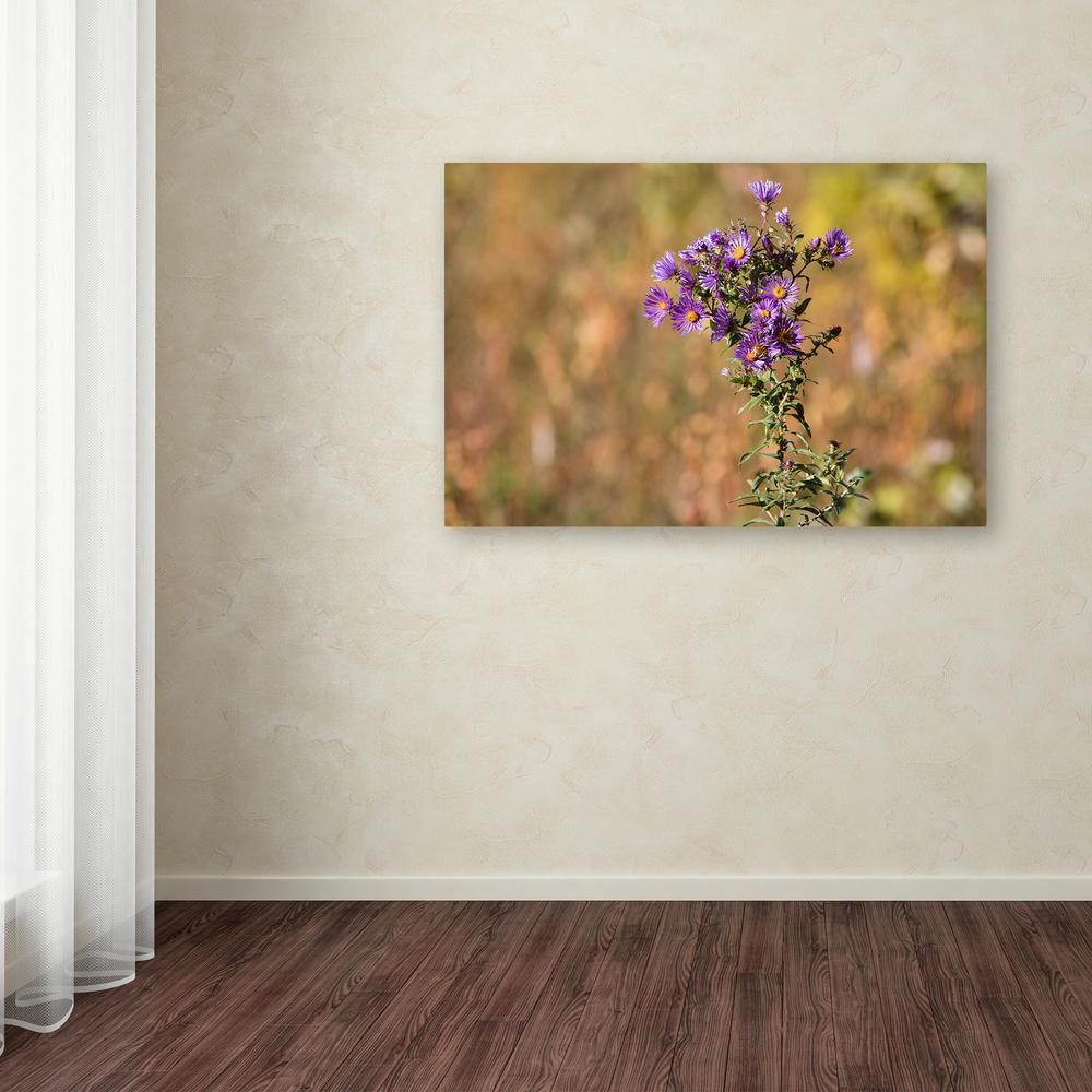 """16 in. x 24 in. """"New England Aster"""" by Jason Shaffer"""