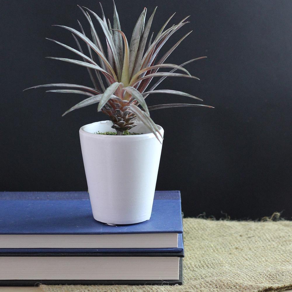 7.25 in. Artificial Aloe Succulent Plant in Pot