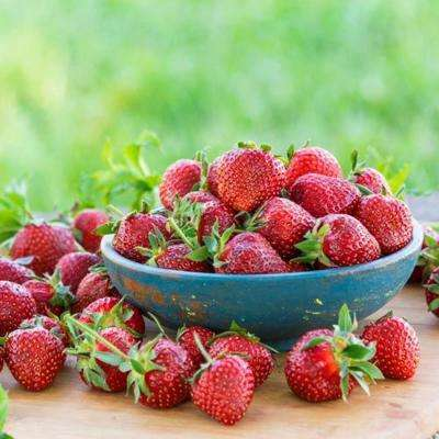 Eversweet Everbearing Strawberry Plants (25-Pack)