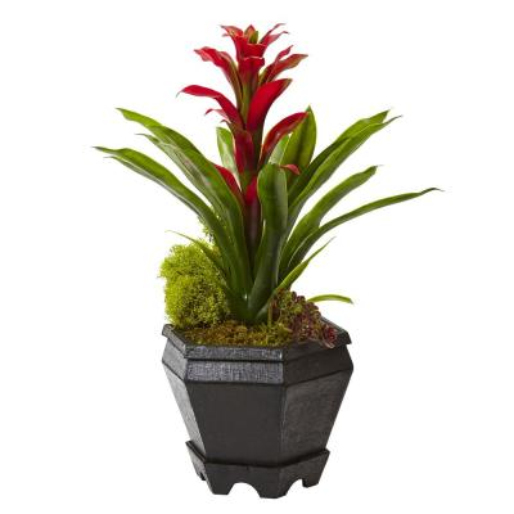 16.5 in. Bromeliad in Black Hexagon Planter in Red