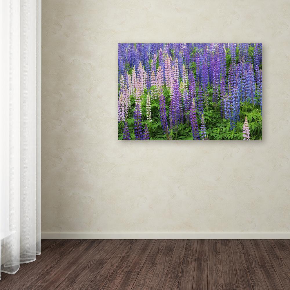 """Trademark 30 in. x 47 in. """"Blue Pink Lupine Flower Field""""..."""