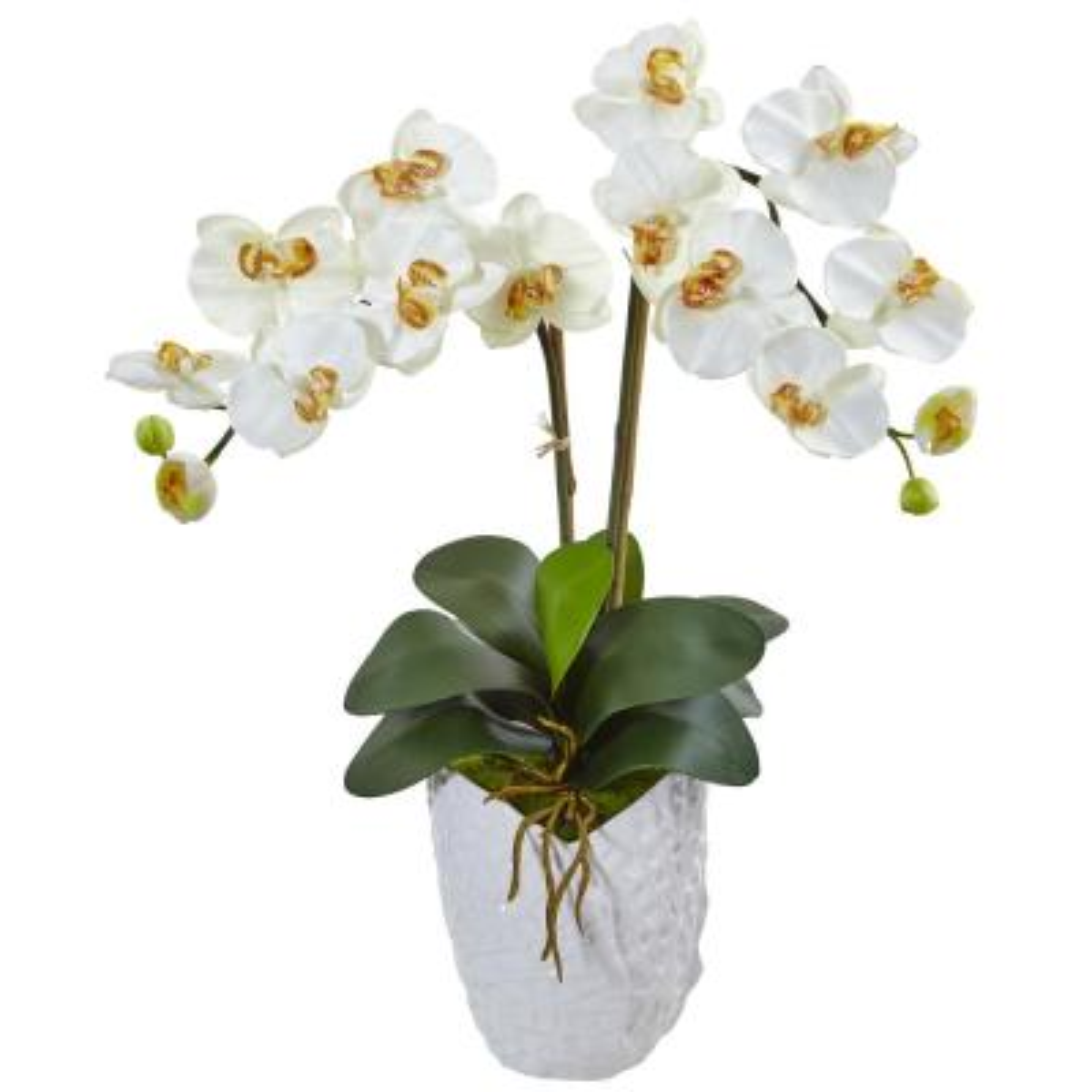 Indoor Double Phalaenopsis Orchid Silk Arrangement in White Vase