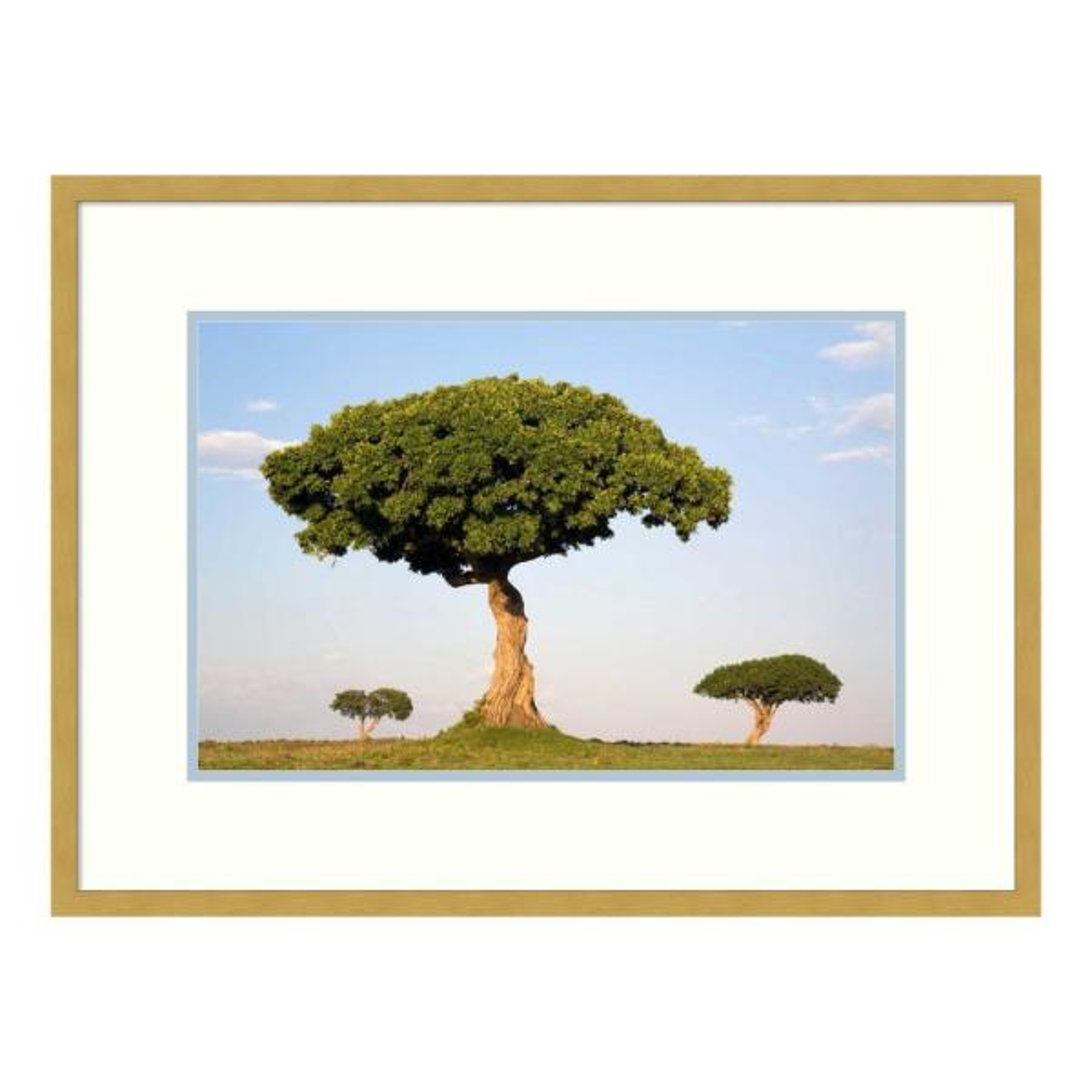 Amanti Art ''Acacia trees, Masai Mara National Reserve, Kenya'' by Ingo