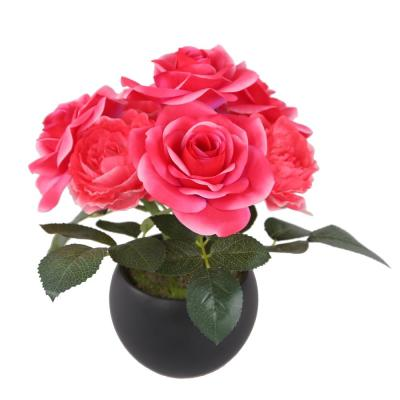 9 in. Potted Pink Rose Flowers