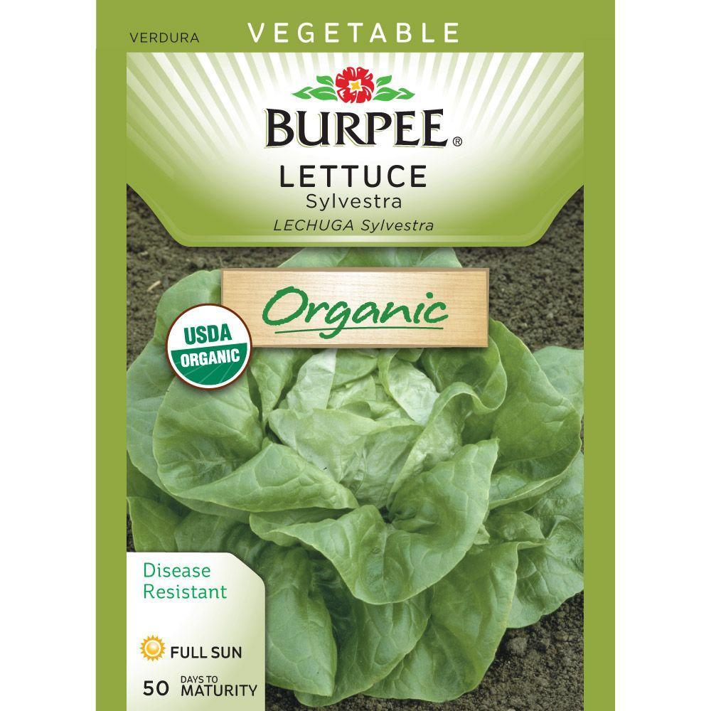 Sylvestra Organic Lettuce Seed