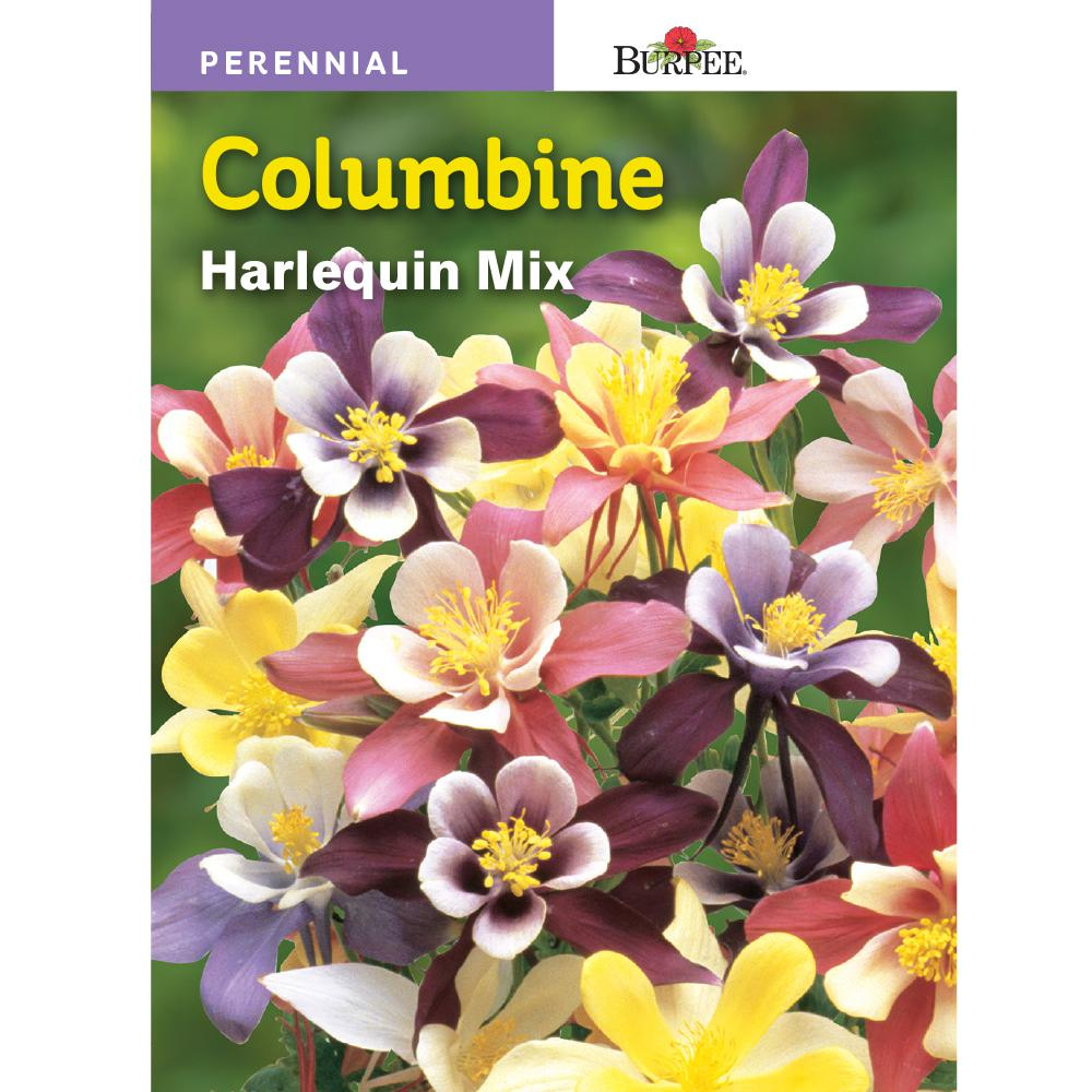Burpee Harlequin Mix Columbine Seed 38258 The Home Depot