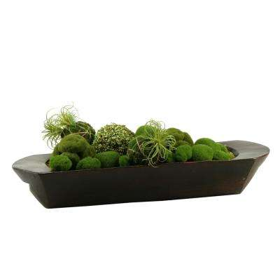 Indoor Assorted Moss Balls in Oblong Dough Bowl