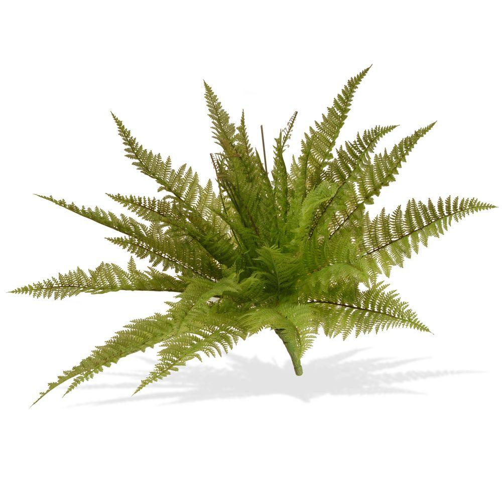 21 in. Garden Accents Ruffle Fern Plant